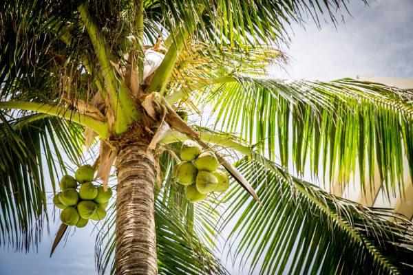 Het goede van palm oil.